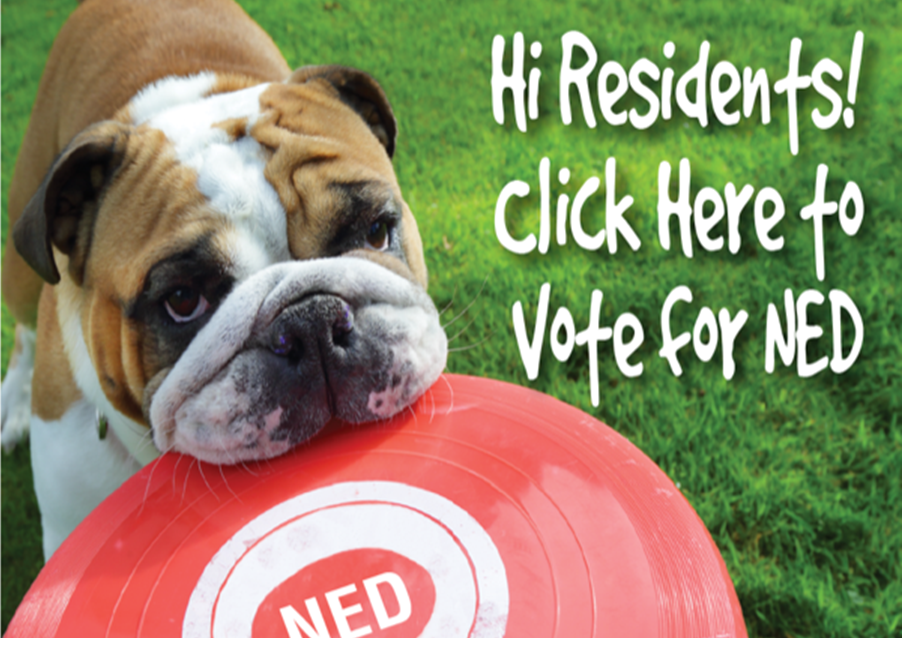 Click here to vote for NED